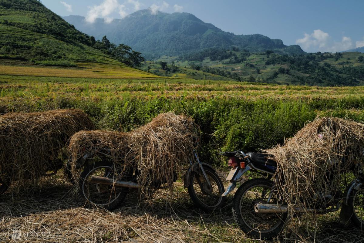Mùa gặt lúa ở vùng cao