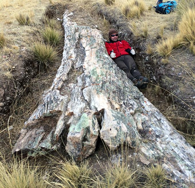 Nhà cổ sinh vật học Edwin Cadena chụp hình kỷ niệm bên thân cây khổng lồ. Ảnh: STRI.