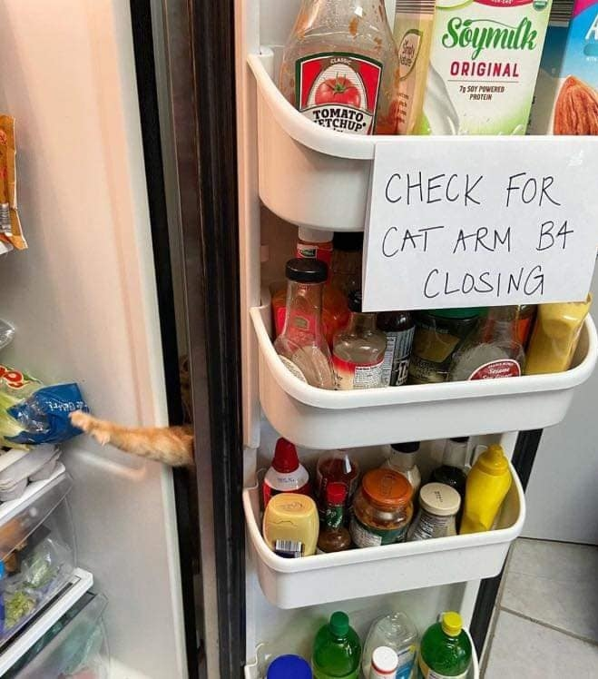 Kiểm tra chân con mèo trước khi đóng cửa - có vẻ như gia chủ đã quá quen và bất lực trước tình huống này..