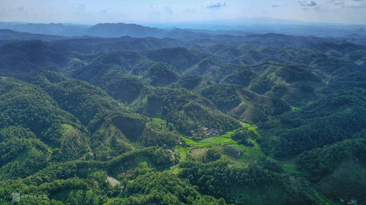 Thu hoạch hồng vành khuyên trên núi