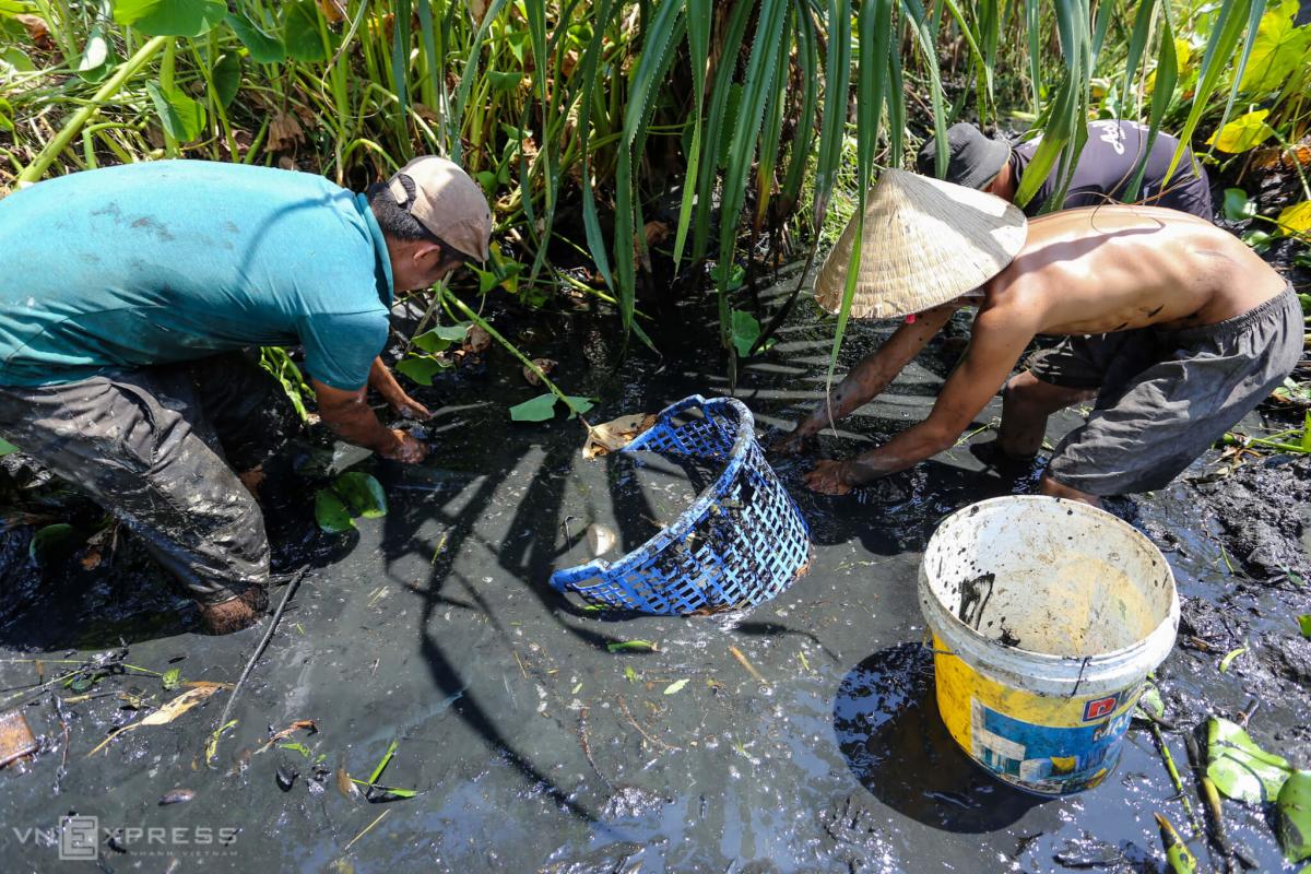 Bắt cá khi ruộng đồng cạn nước