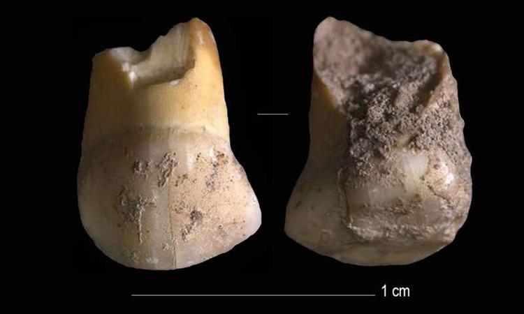 Phát hiện răng sữa 48.000 năm tuổi