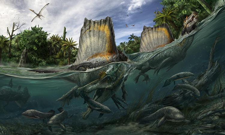 Phát hiện hàng trăm răng hóa thạch của Spinosaurus