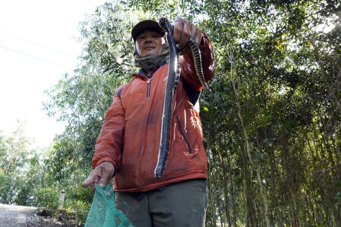 Một nông dân ở Tân Lập, Mộc Hóa, Long An thăm dớn trở về, trong túi lưới chỉ có vài con rắn bông súng nhỏ. Ảnh: Hoàng Nam.