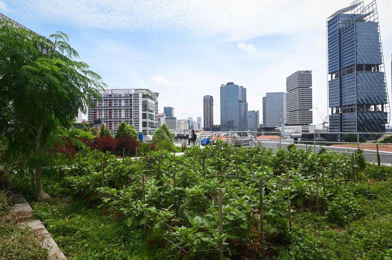 Nông trại chọc trời ở Singapore
