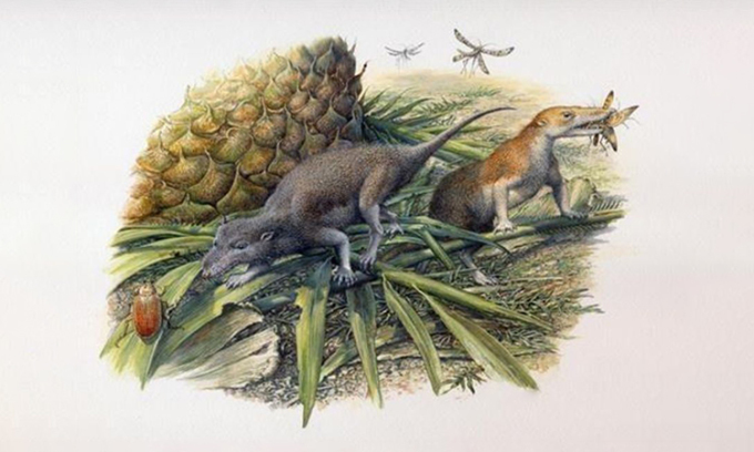 Mô phỏng hai loài thứ tiền sử Morganucodon (trái) và Kuehneotherium (phải). Ảnh: Pam Gill.