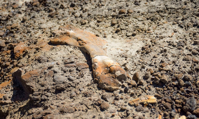 Một mảnh xương lớn lộ rõ trên mặt đất. Ảnh: Nature Conservancy.