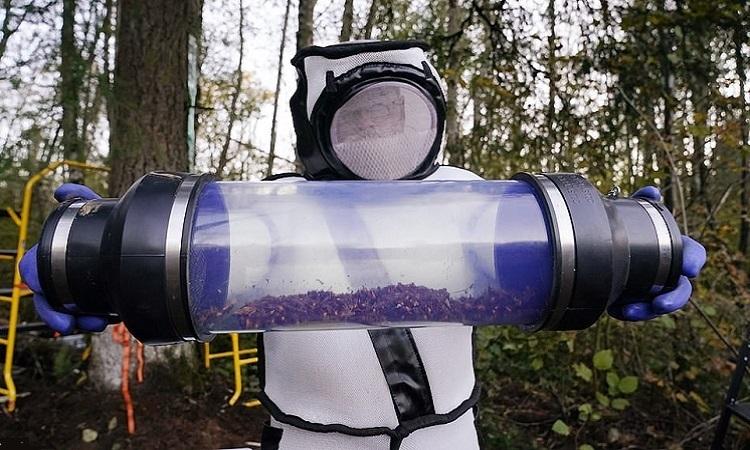 Phá hủy tổ ong bắp cày 'sát thủ' đầu tiên trên đất Mỹ