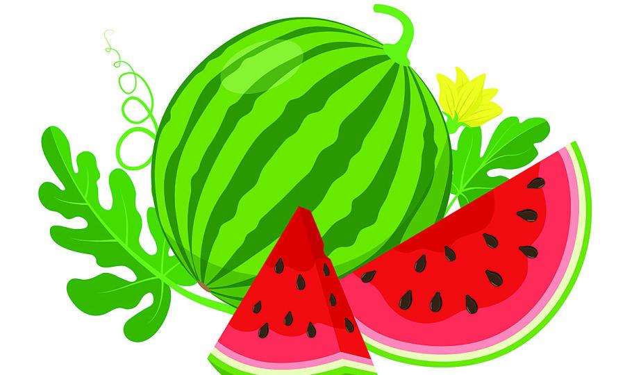 Bài toán thu hoạch dưa hấu