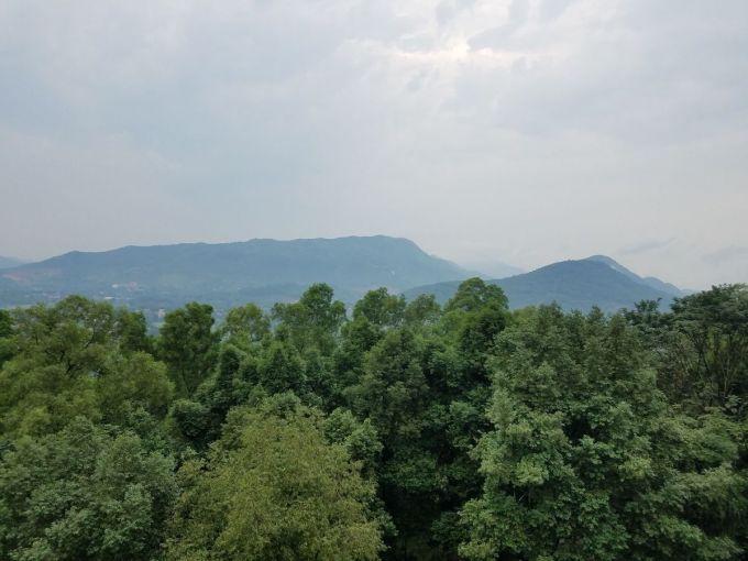 Rừng trồng tại ĐH Lâm Nghiệp sau gần 30 năm đã có thảm thực vật như rừng tự nhiên. Ảnh: G.N