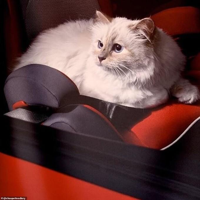 Với lượng tài sản kếch xù, Lagerfeld không ngần ngại chi trả một khoản tiền lớn cho Choupette. Ông sắm hẳn phòng ngủ riêng, đồng thời thuê 2 người giúp việc chăm sóc 24/24 cho nàng mèo cưng của mình.