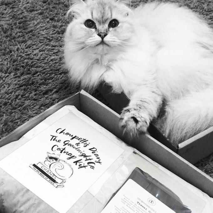 Mèo Choupette sở hữu 74 nghìn người theo dõi trên mạng xã hội. Chú mèo này hiện có một cuộc sống vương giả khiến nhiều người tròn mắt ngưỡng mộ.