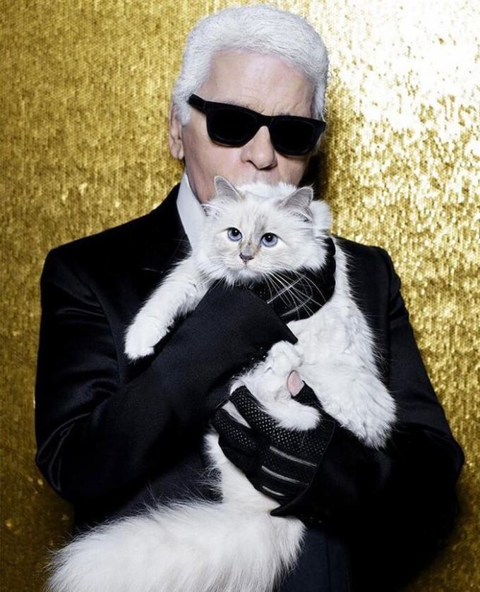 Sau khi ông chủ Karl Lagerfeld – Giám đốc sáng tạo Chanel qua đời năm 2019, chú mèo Choupette được thừa kế 200 triệu USD và trở thành chú mèo giàu nhất thế giới.