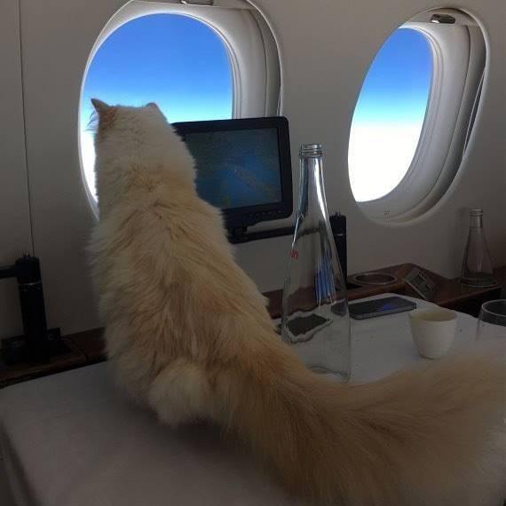Nàng có những chuyến bay trên phi cơ riêng.