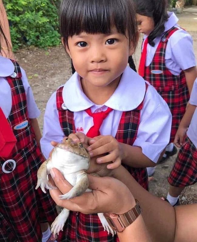 Một em học sinh có chút rón rén chạm tay vào chú ếch.