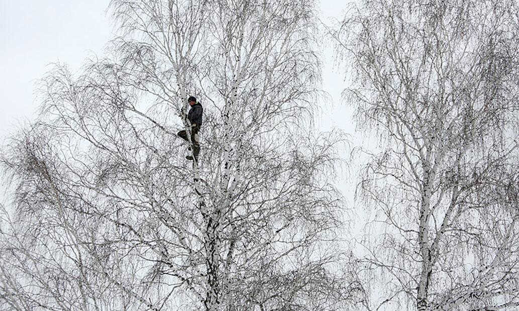 Trèo lên cây cao 8 m học online