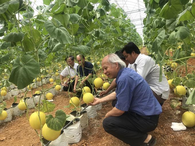 Phân bón hữu cơ từ phế phẩm mía lúa sử dụng tại mô hình rau quả tại Hợp tác xã Thọ Lâm, Thanh Hóa. Ảnh: Nhóm nghiên cứu.