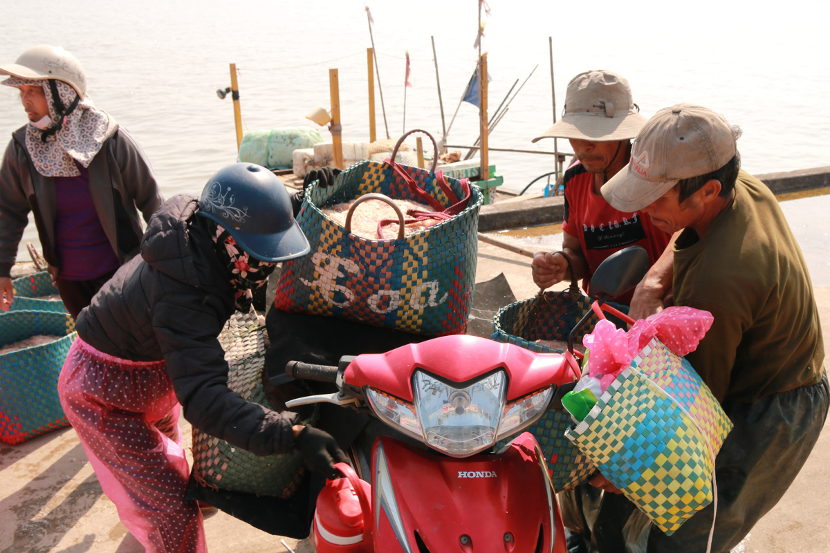 Ngư dân thu tiền triệu mỗi ngày nhờ đánh tép biển
