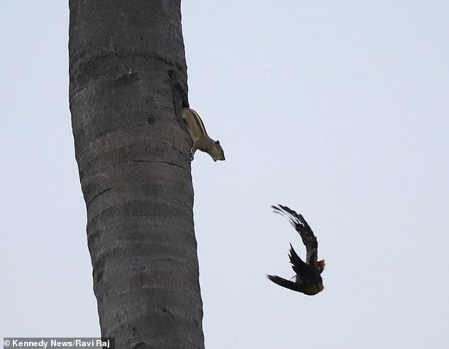Con chim hư đốn này!!