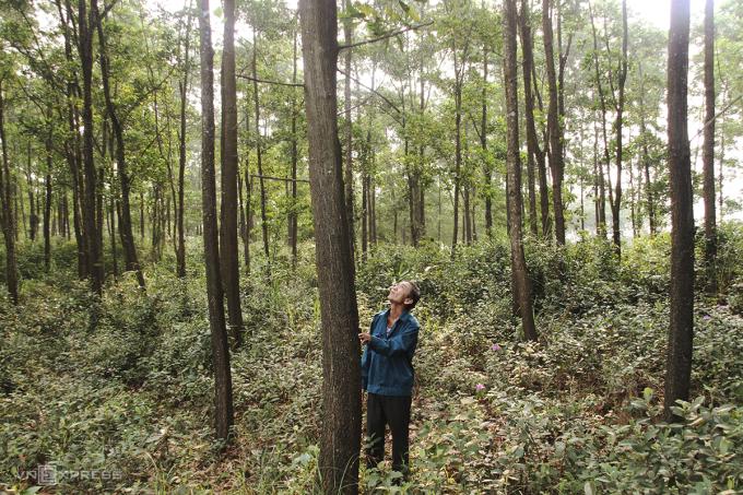 Một hộ dân trong khu rừng trồng theo chứng chỉ FSC ở Quảng Trị. Ảnh: Hoàng Táo.