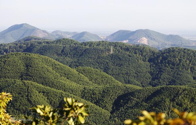 Những cánh rừng keo trồng theo phương gỗ lớn phủ xanh đồi núi tỉnh Thừa Thiên Huế. Ảnh: Võ Thạnh.