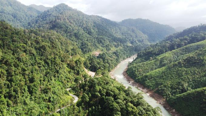 Rừng phòng hộ Sông Tranh, xã Trà Tập, huyện Nam Trà My, Quảng Nam. Ảnh: Đắc Thành