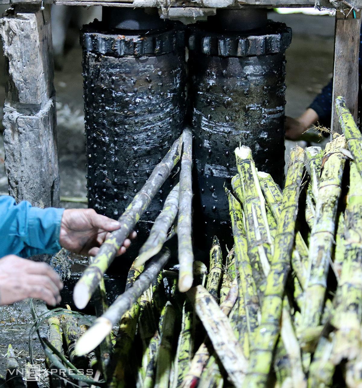 Dùng trâu ép mía tạo mật