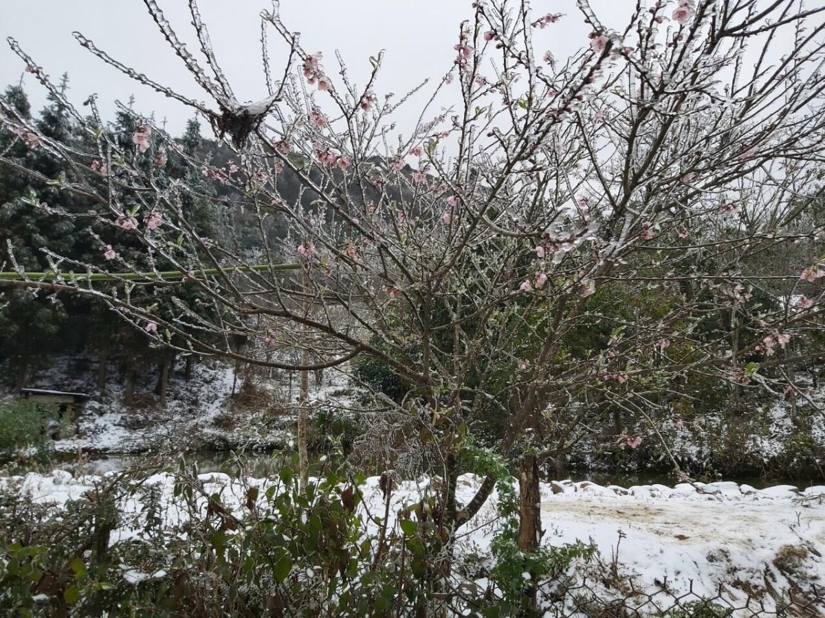 Tuyết phủ trắng núi rừng