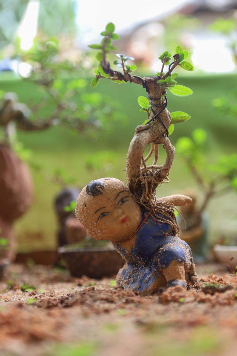 Bộ sưu tập hơn 5.600 bonsai