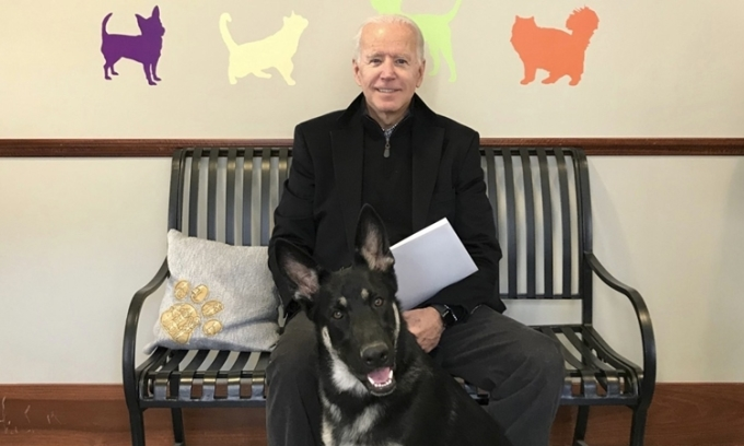 Chó cưng của Biden sẽ có 'lễ nhậm chức' riêng