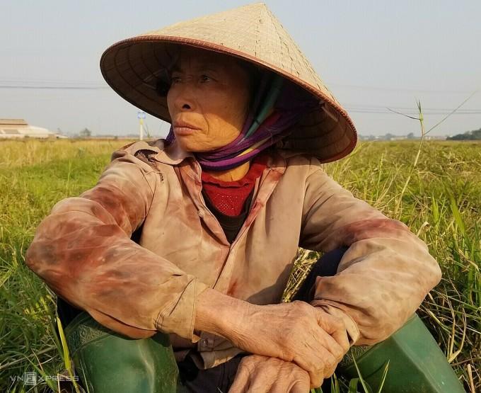 Bà Kỳ sức khoẻ kém, vẫn kiếm thêm nhiều việc làm thuê để có tiền trang trải cuộc sống. Ảnh: Thanh Vân