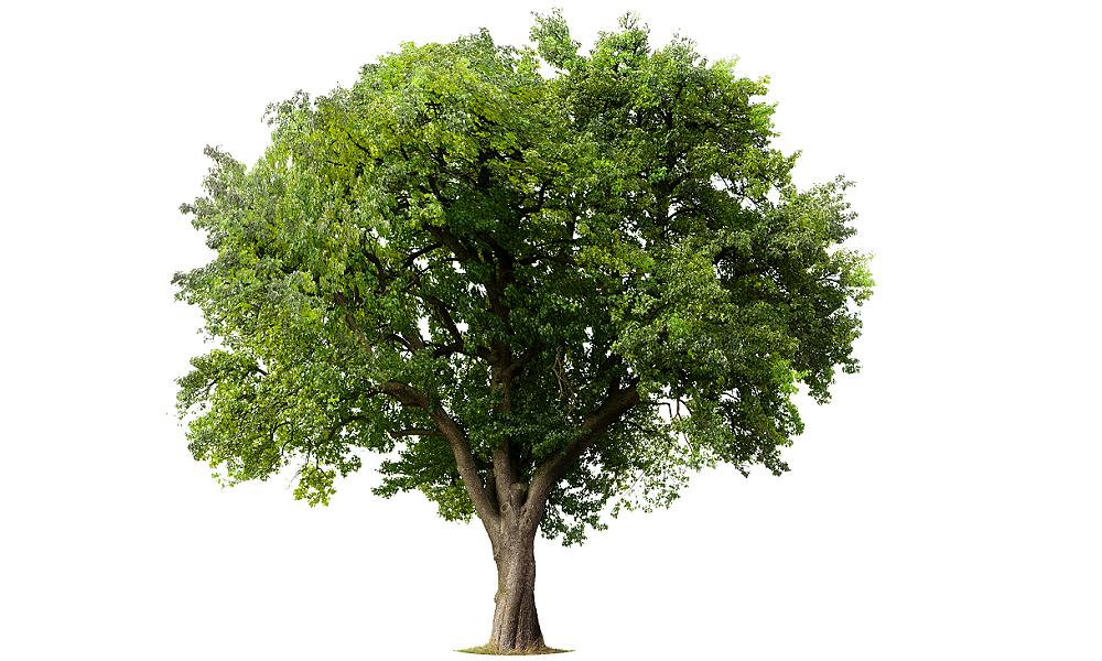 Từ vựng tiếng Anh về các bộ phận của cây