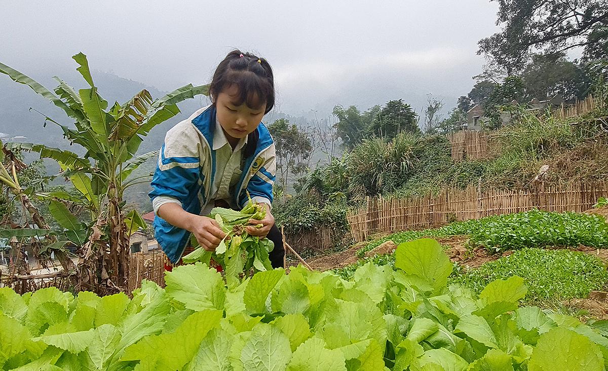 Vườn rau sạch của học sinh bán trú