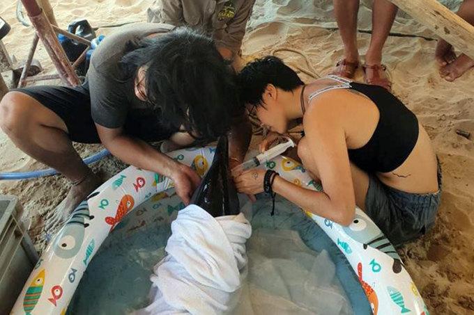 Các tình nguyện viên trong lần cứu hộ cá heo gặp nạn ở biển Mỹ Khê, trước khi cùng nhau thành lập và duy trì Sasa. Ảnh: Nam Em.