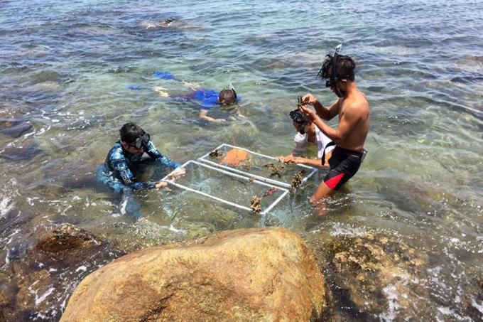 Các thành viên đội Sasa làm giá thể tái tạo san hô ở Sơn Trà. Ảnh: Sasa.