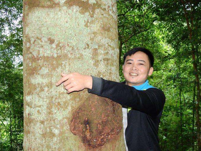 Anh Triệu Tiến Lộc ôm một cây lim hàng chục năm, hai tay anh ôm không hết. Ảnh: Minh Cương
