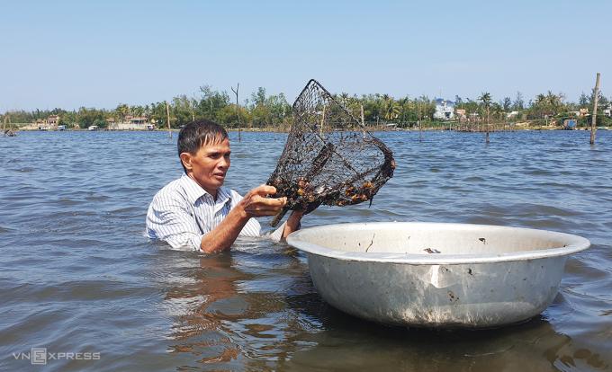 Trương Văn Trung ngâm mình trong nước dùng vợt bắt nghêu dưới đáy sông. Ảnh: Sơn Thủy.
