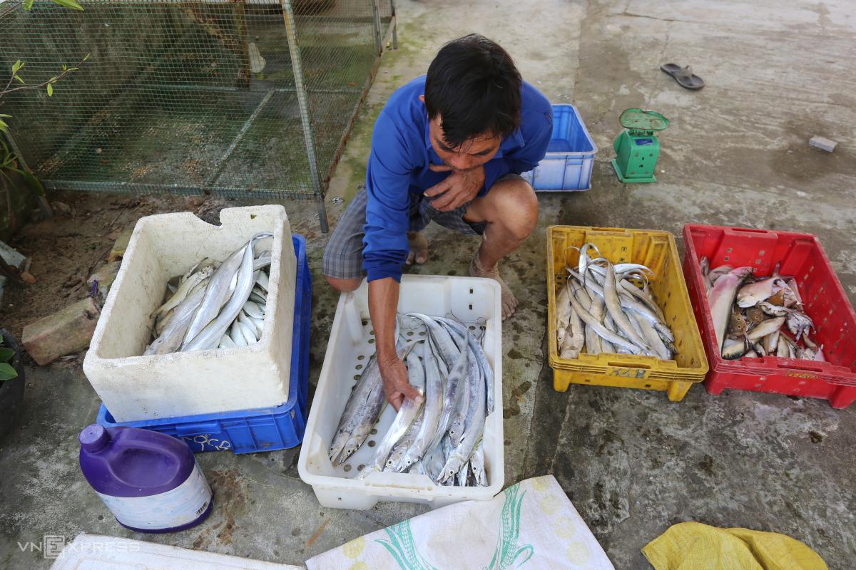Ngư dân được mùa cá hố