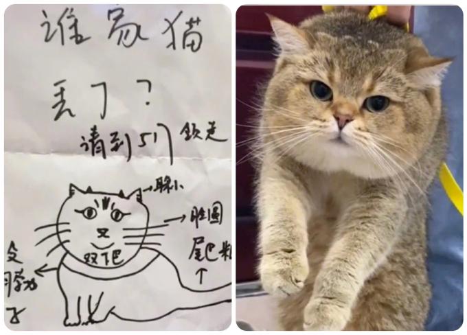 Xem ra trong số các tờ thông báo tìm mèo, tìm chủ thì tờ này có vẻ vẽ không giống nhất.