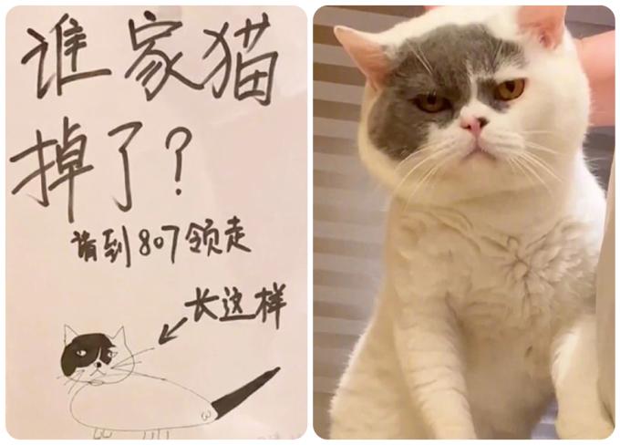 Ai làm mất mèo thì mời đến phòng 807 nhận về.