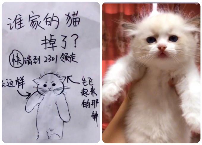 Nhà ai làm mất mèo mời đến phòng 2301 nhận về. Chú mèo tìm chủ trông như thế này (kèm hình vẽ), trên đầu còn có mấy cọng lông bay bay...