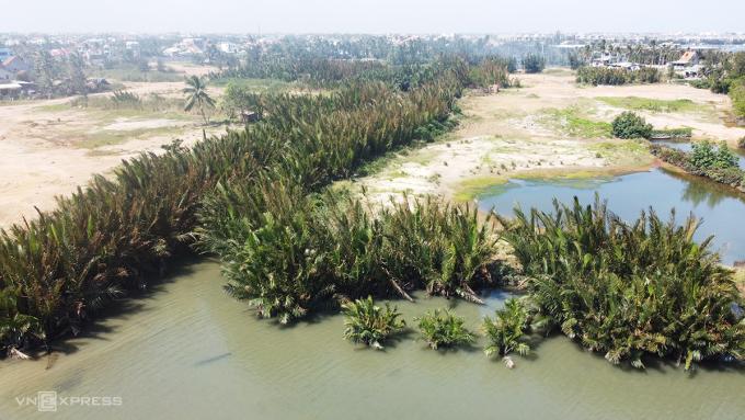 Rừng dừa Cẩm Thanh sẽ được chuyển đổi để xây dựng khu đô thị Cồn Tiến. Ảnh: Đắc Thành.