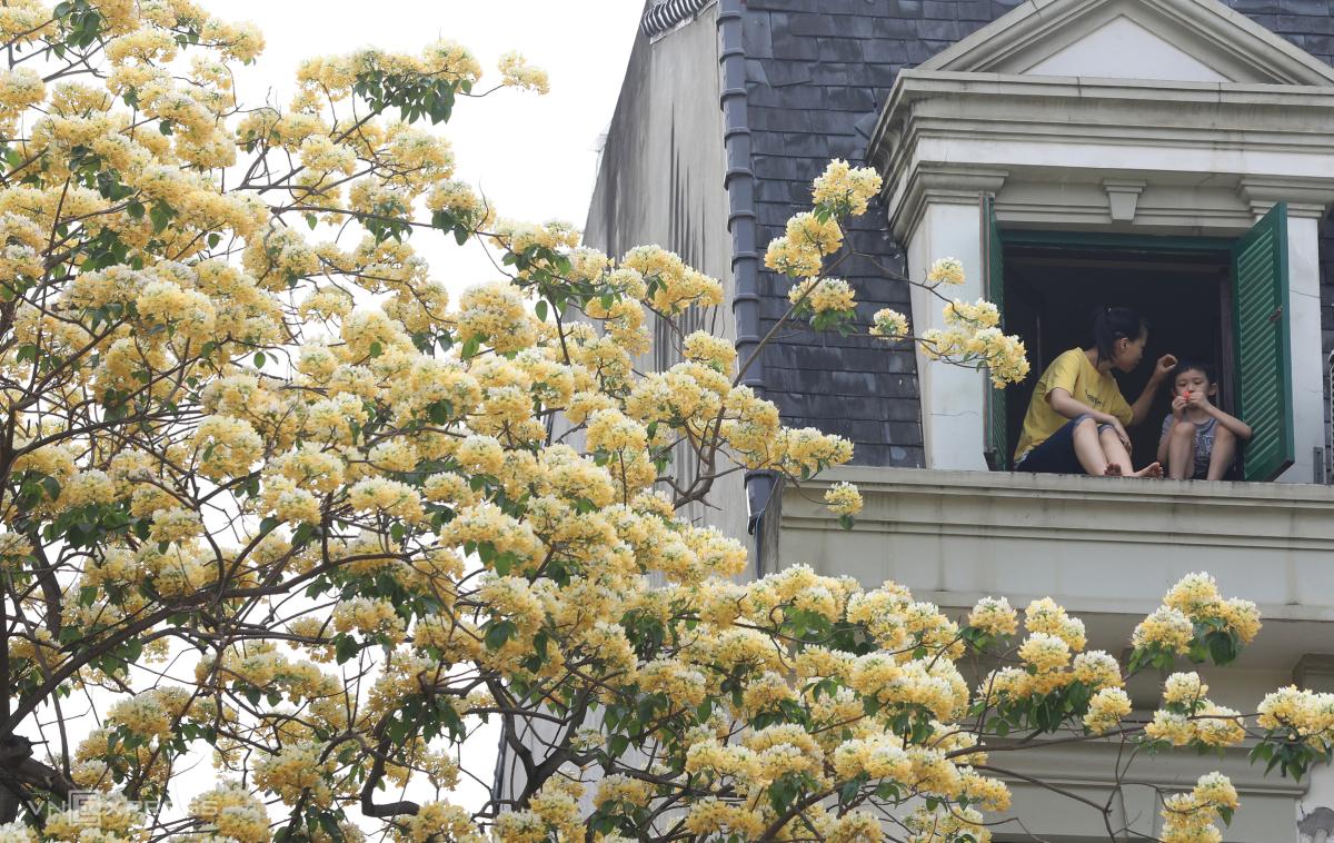 Cây hoa bún trăm tuổi toả hương khoe sắc - Ảnh 4