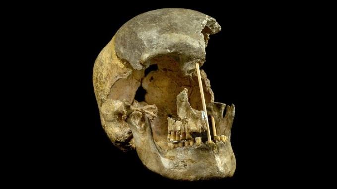 Tái tạo gene từ hộp sọ 45 nghìn năm
