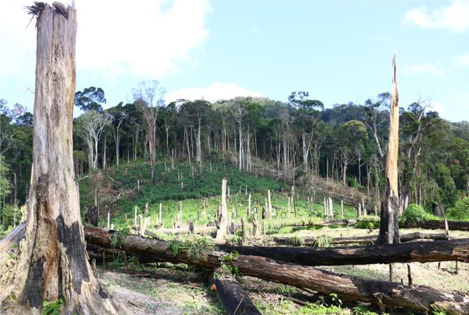Một vụ phá rừng xảy ra trên địa bàn huyện Đắk Song.