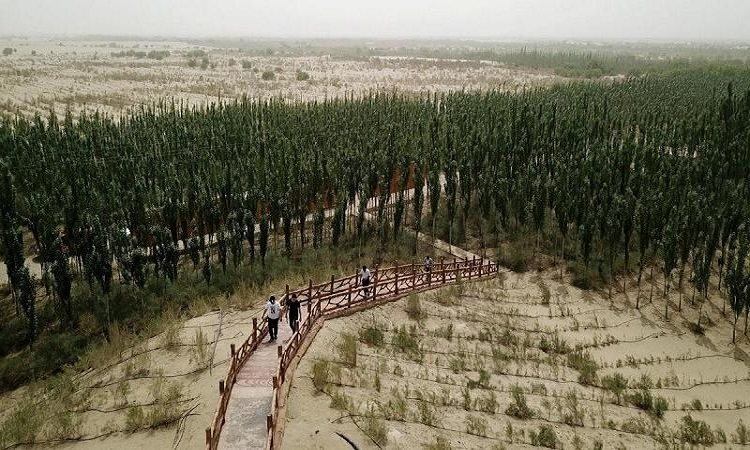 Nỗ lực phủ xanh 8.000 hecta đất sa mạc ở Tân Cương