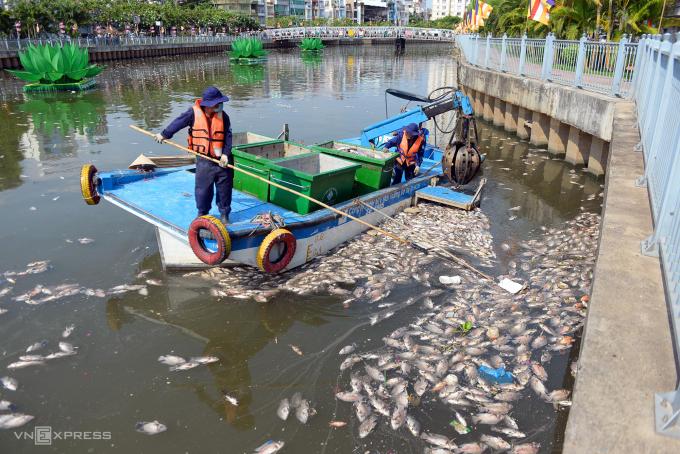 Công nhân Công ty TNHH MTV Môi trường Đô thị TP HCM vớt cá chết trên kênh Nhiêu Lộc - Thị Nghè hồi năm 2016. Ảnh: Hữu Khoa