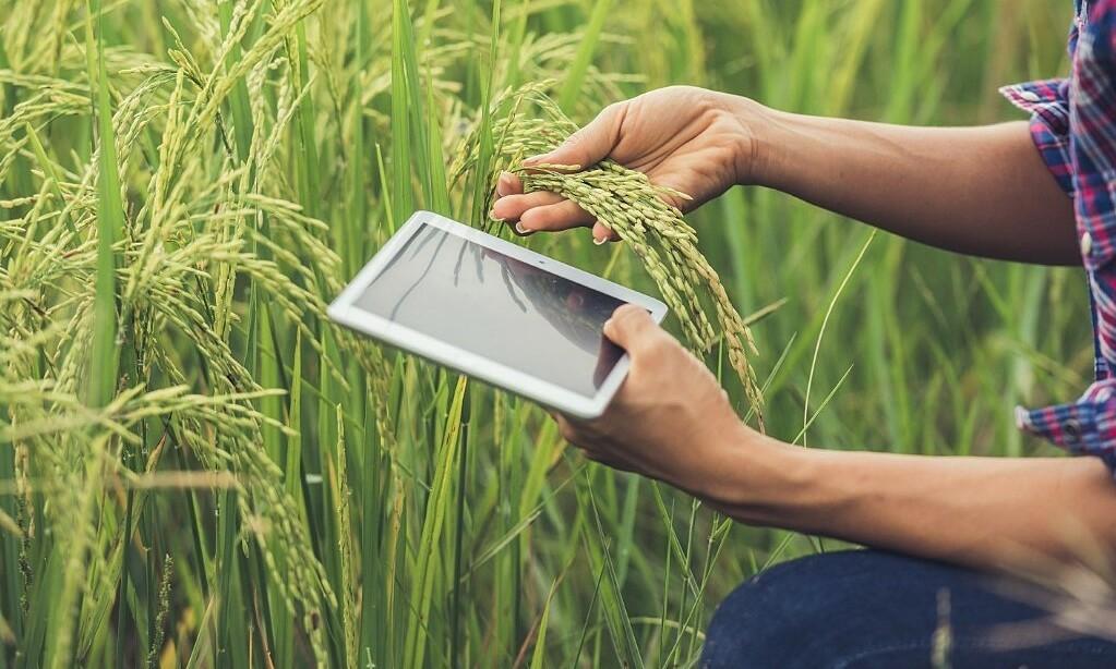 Cơ hội việc làm ngành kinh doanh nông nghiệp trong tương lai