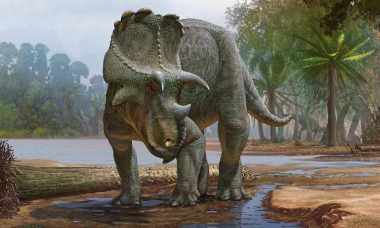 Hóa thạch tiệt lộ loài khủng long có sừng cổ xưa nhất