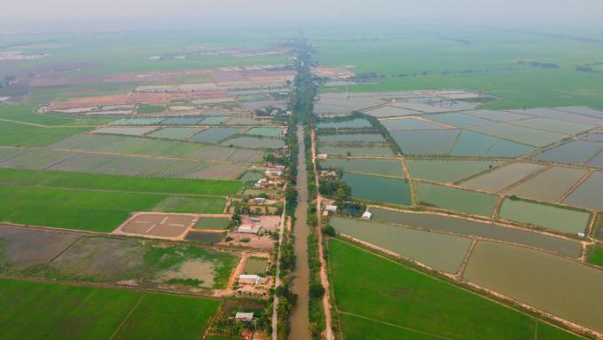 Hàng chục ha ao nuôi cá tra xen lẫn ruộng lúa tại ấp Gò Pháo,  Hưng Điền B, Tân Hưng giữa tháng 5. Ảnh: Hoàng Nam